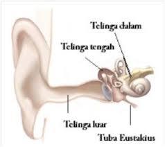 Bagian-bagian telinga manusia