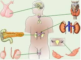 Sumber hormon