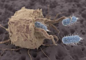 Makrofag fagositosis
