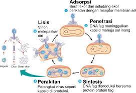 Replikasi virus