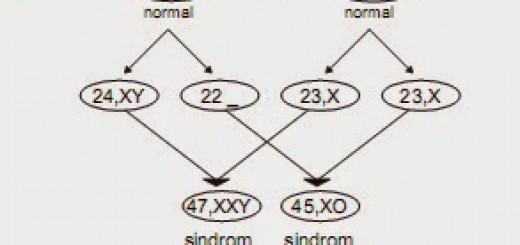 ciri-2Bpisik-2Bmutasi-2Bkromosom