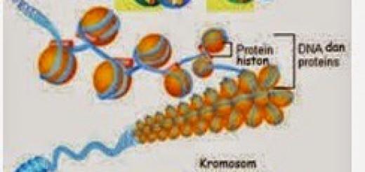 struktur-2Bgen-2Bok