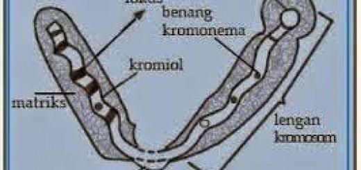struktur-2Bkromosom