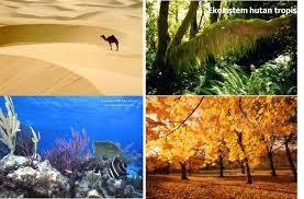 Keanekaragaman jenis pada gurun pasir, htan topis, laut