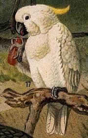 Burung Kakaktua