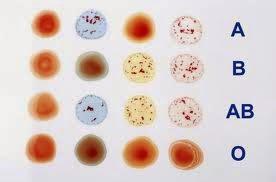 Macam golongan darah manusia