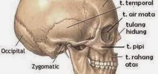 tulang-2Bkepala