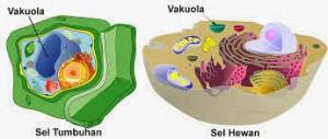 Struktur vakuola