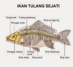 Struktur ikan