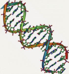 Heliks ganda DNA