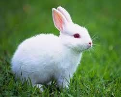 Kelinci (termasuk eukaryota)