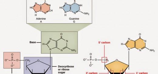 Struktur-2BRNA