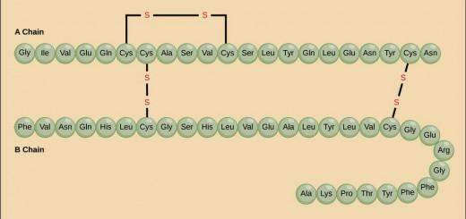 Struktur-2Bprimer-2Bprotein