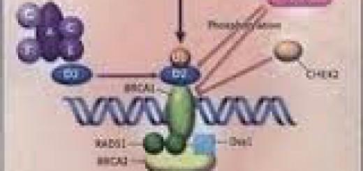 Gen-2Bpenekan-2B-2Btumor