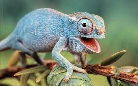 Hewan reptil
