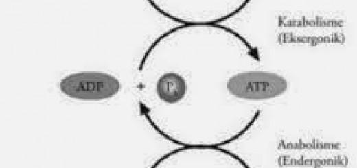 Hidrolisis-2BProtein
