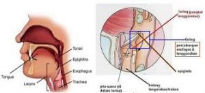 Kerongkongan (esophagus)