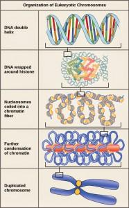 Penggabungan DNA
