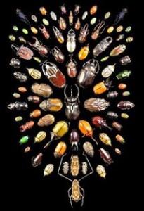 Spesies kumbang yang berbeda