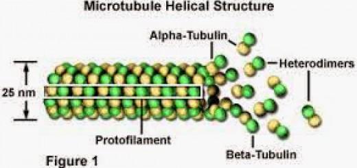 Struktur-2BMicrtubulus