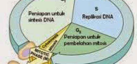 Tahapan-2Binterfase
