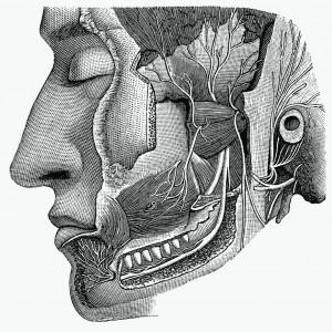 12 Saraf kranial Otak
