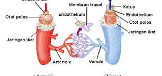 Arteri dan vena