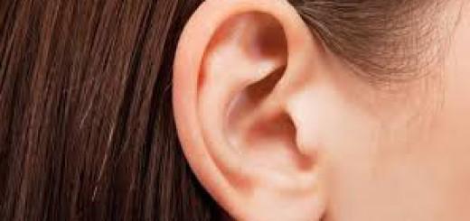 Daun telinga