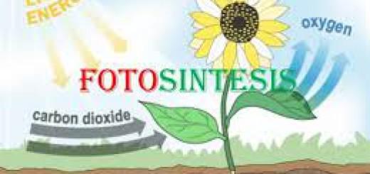 Fotosintesis merupakan contoh reaksi endorgenik