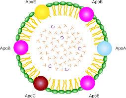 Struktur lipoprotein
