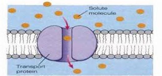 Transpor protein