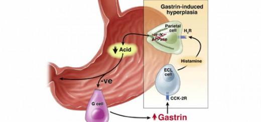 Hormon gastrin