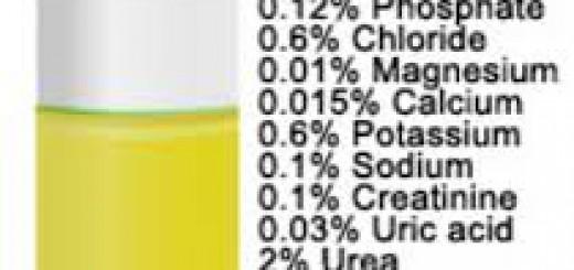 Komposisi kimia Urine