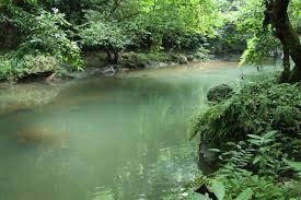 Komunitas sungai