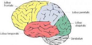 Lobus frontal