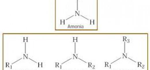 Struktur amina