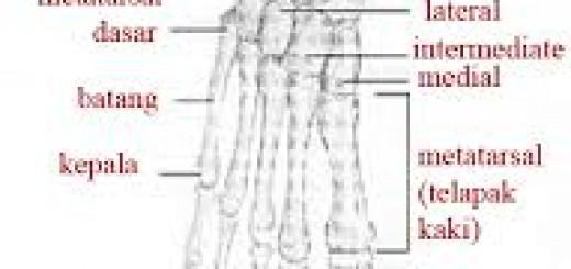 Struktur kaki