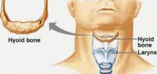 Tulang hyoid