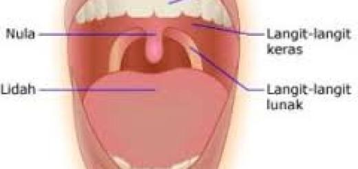 Anatomi mulut manusia