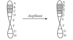 Proses mutasi duplikasi