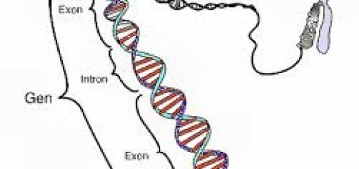 Struktur gen