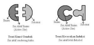 Cara kerja enzim