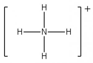 Struktur Leuwis ion ammonium, dengan muatan positif ditulis di luar kurung
